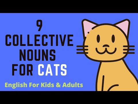 9 Collective Nouns For Cats
