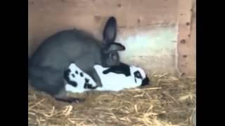 เมื่อกระต่ายถึงจุดสุดยอด ....