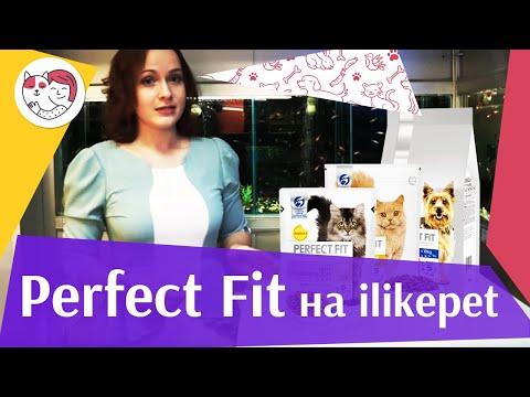 Корм для кошек перфект фит: состав, линейки, отзывы