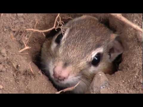 Cute Chipmunk in the hole
