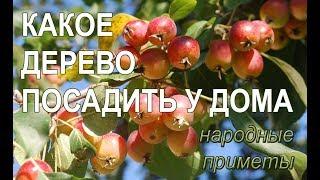 Какое дерево посадить у дома, чтобы в семье был достаток, благополучие и любовь? Народные приметы