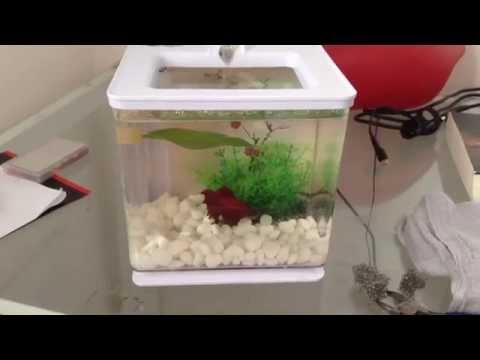 Marina Ez Care Betta Diy Built In Filter Youtube
