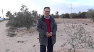 Olivenbäume für Tunesien