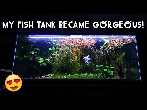 OMG! MY FISH TANK BECAME GORGEOUS! | Vlog #264
