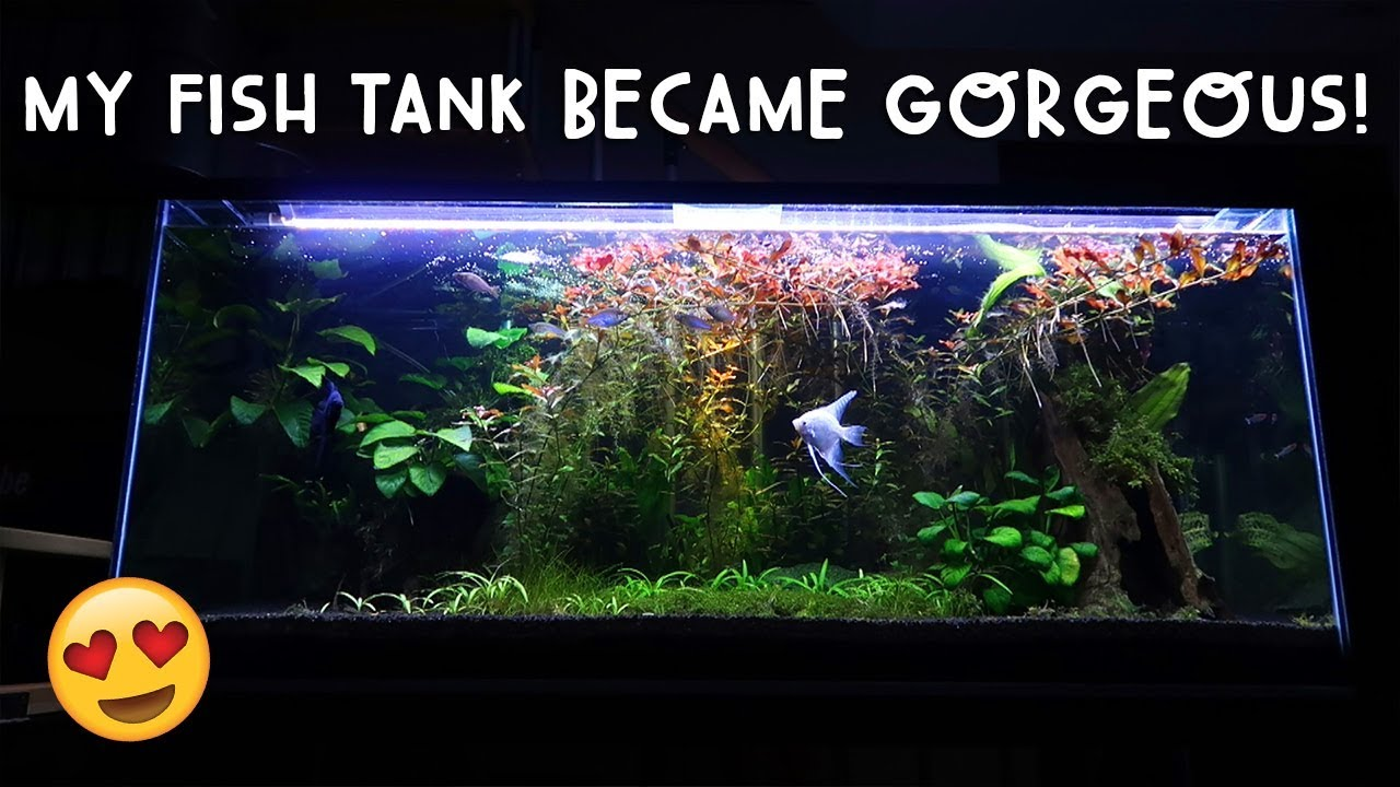 Omg my fish tank became gorgeous vlog 264 youtube for Fish tank youtube