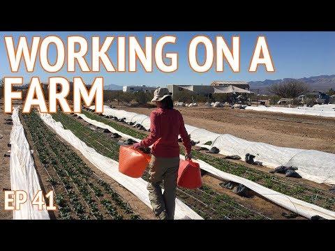 WORK EXCHANGE - Sustainable Farming in Benson Arizona