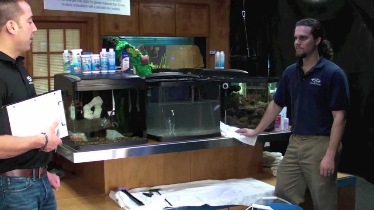 Freshwater aquarium fish maintenance - Fish Guy Tv Freshwater Aquarium Maintenance Mov