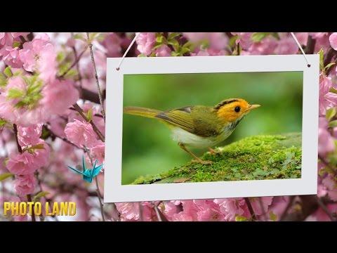 Весна идёт! Весне дорогу! || PHOTO LAND (весна, смотреть весна, весна фото, весна 2015 фото)