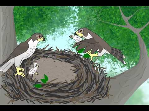 Про птицы мультфильм