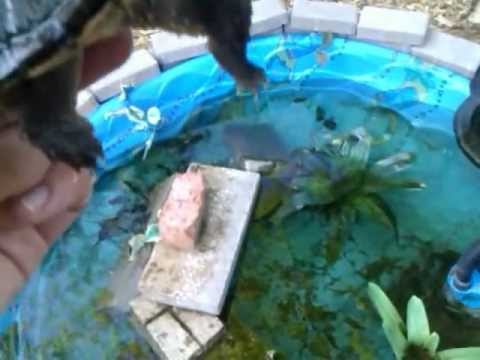 Turtle pond outdoor setup youtube for Outdoor fish pond setup