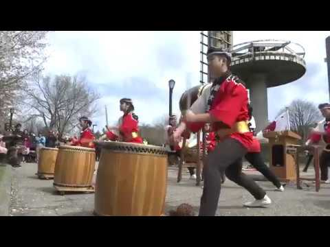 NY1 Cherry Blossoms 2017 in Flushing Meadows with traditional Japanese arts and a tea ceremony