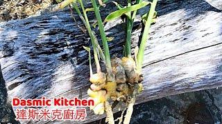 ❮生薑❯冷凍保存法 | How to Store and Freeze Ginger | Tips