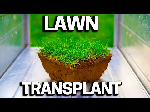 Repair Damaged Lawn Spots In 1 Minute  With This Tool - BMS Turf Doctor
