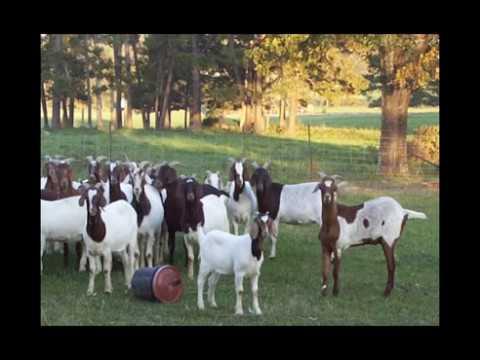 Inkatrack , Animal Tracking system