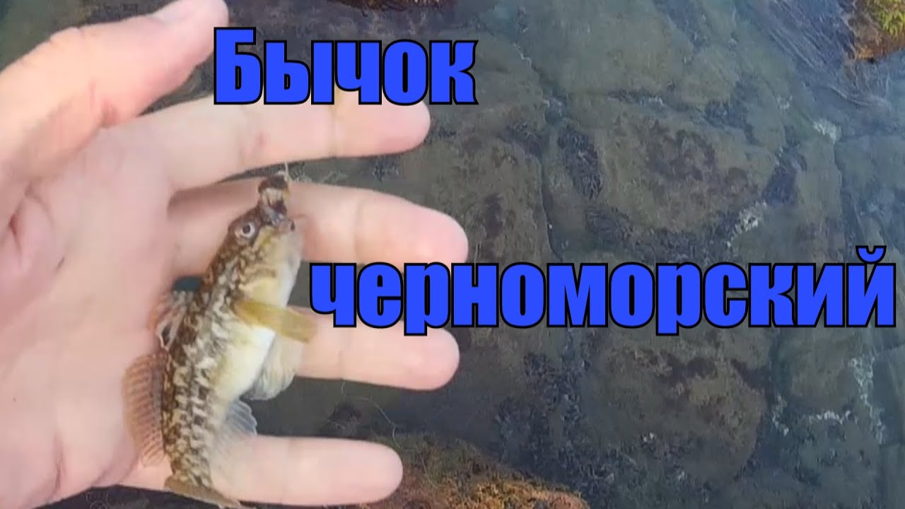 Как поймать бычка на море.Ловля бычка на Черном море с берега поплавочной удочкой.
