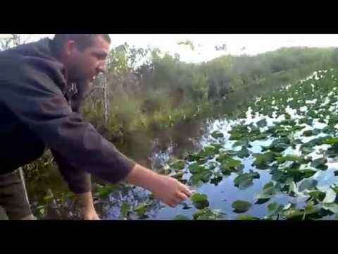 Everglades em Miami-EUA