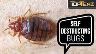 10 Supremely Self Destructive Animals