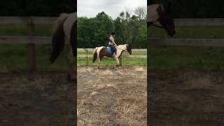 Jigsaw 8 year old mare