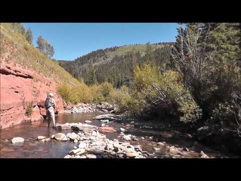 SW Colorado Fly-Fishing Trip On A Dolores River Tributary Near Telluride