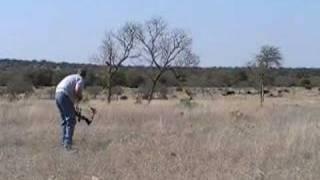 48.5 Yard Black Buck Archery Shot (Mathews switchback XT)
