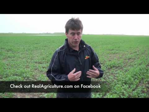 Canola School: Late Application of Glyphopsate at the Bolting Stage - Bruce MacKinnon, Monsanto