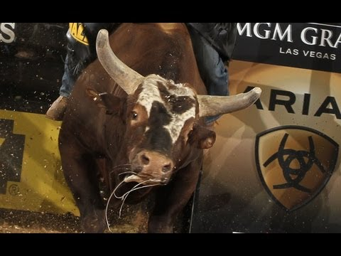 World Champion Bull contender Bushwacker dispatches Marco