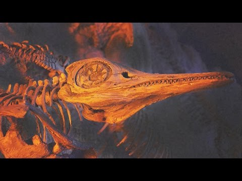 11 AMAZING Fossil Discoveries