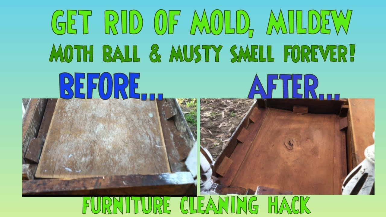 Remove Mold & Mildew from Furniture DIY Hack Stop The Stink Mold, Mildew,  Musty, Moth Balls Hack