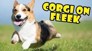 corgi-on-fleek-life-after-college-ep-516