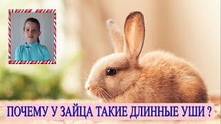 🐰 Почему у зайца (кролика) длинные уши