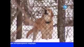 11 03 2013 Отлов собак