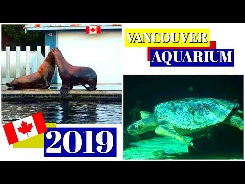VANCOUVER AQUARIUM TOUR 2019 ~ BC CANADA TRAVEL