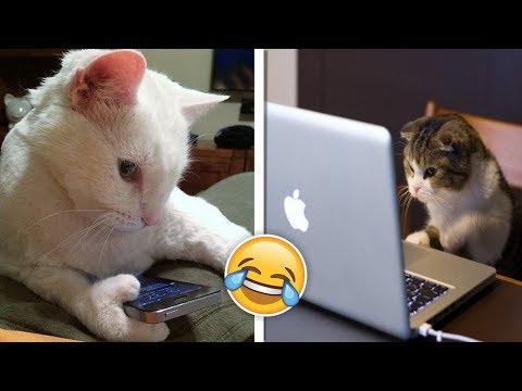 İnsan Gibi Davranan Komik Kediler!