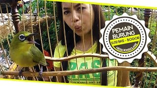 BRANDY WATCH : Ibu Rumah Tangga Sukses Bikin Pleci Gacor Durasi Panjang Juara Nasional