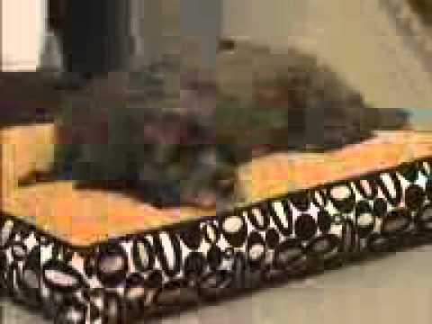 Crypton Melrose Pet Bed