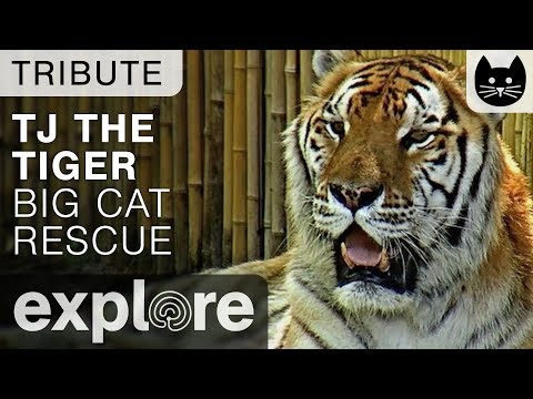The Bengal Cat Rescue Network