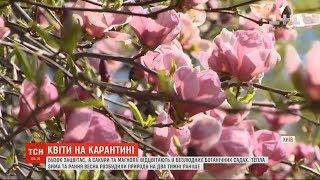 Природа на перепочинку: без українців у парках буяє ранній бузок і вже відцвітають магнолії