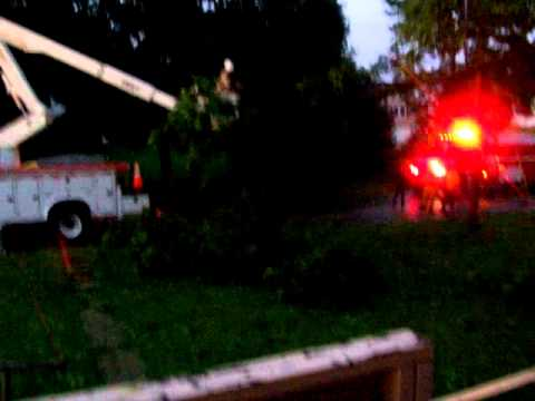 city cutting down the tree