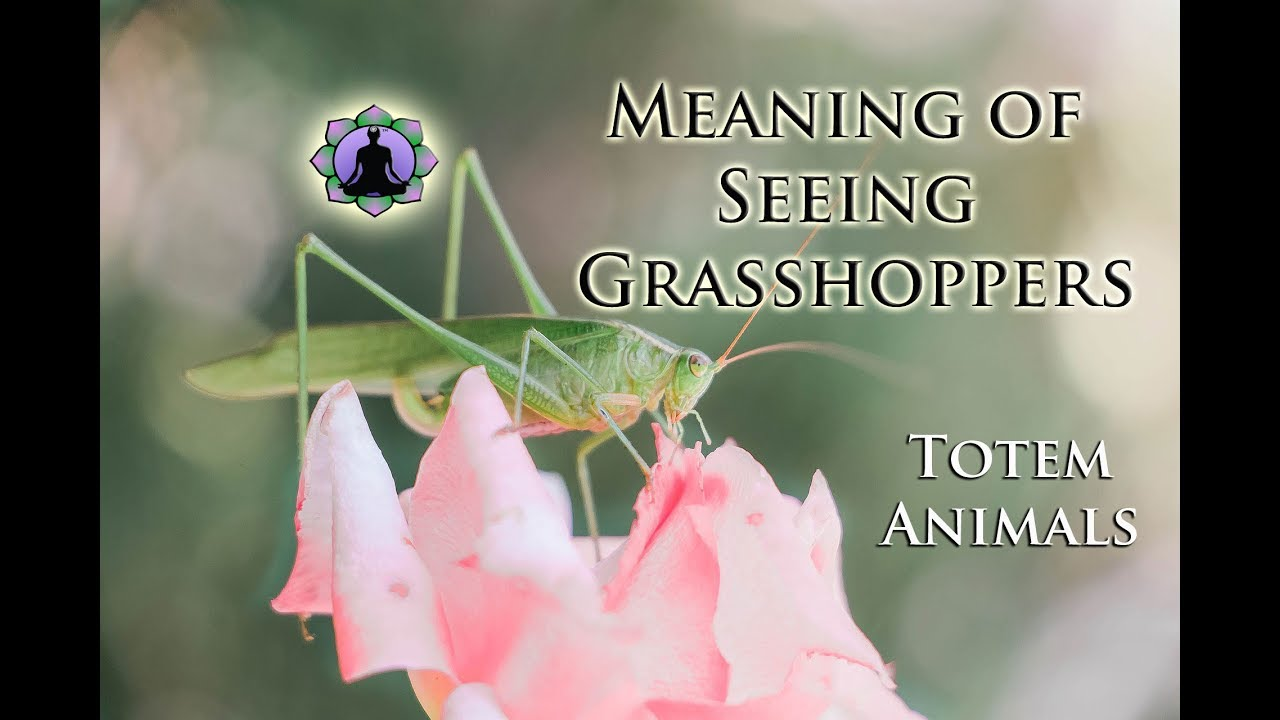 The Meaning Of Seeing Grasshoppers Totem Animals And Signs Youtube