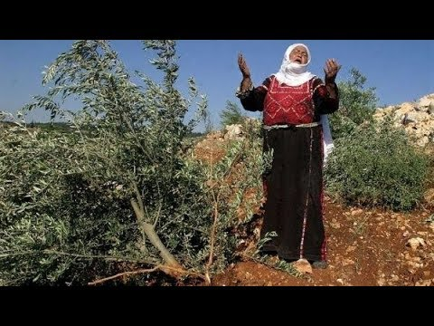 Israeli Settlers Destroy Palestinians Ability To Live
