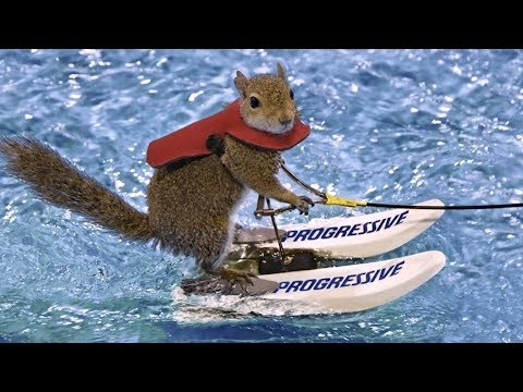 Twiggy the Waterskiing Squirrel Retires After 39 Years of Fame