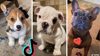 Funniest Doggos of TikTok ~ Most Adorable Puppies TIK TOK