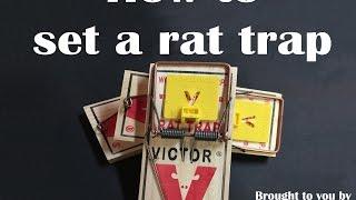Pestec: How to Set a Rat Trap
