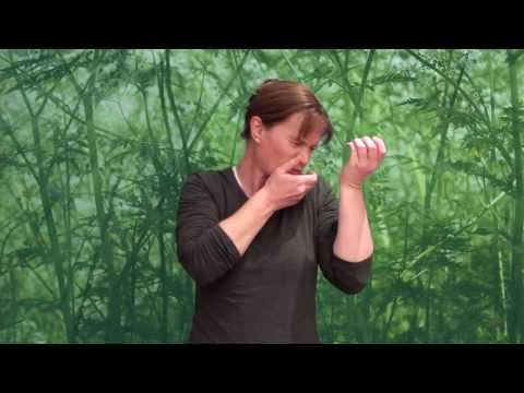 Jokes In Auslan - The Famous Violinist