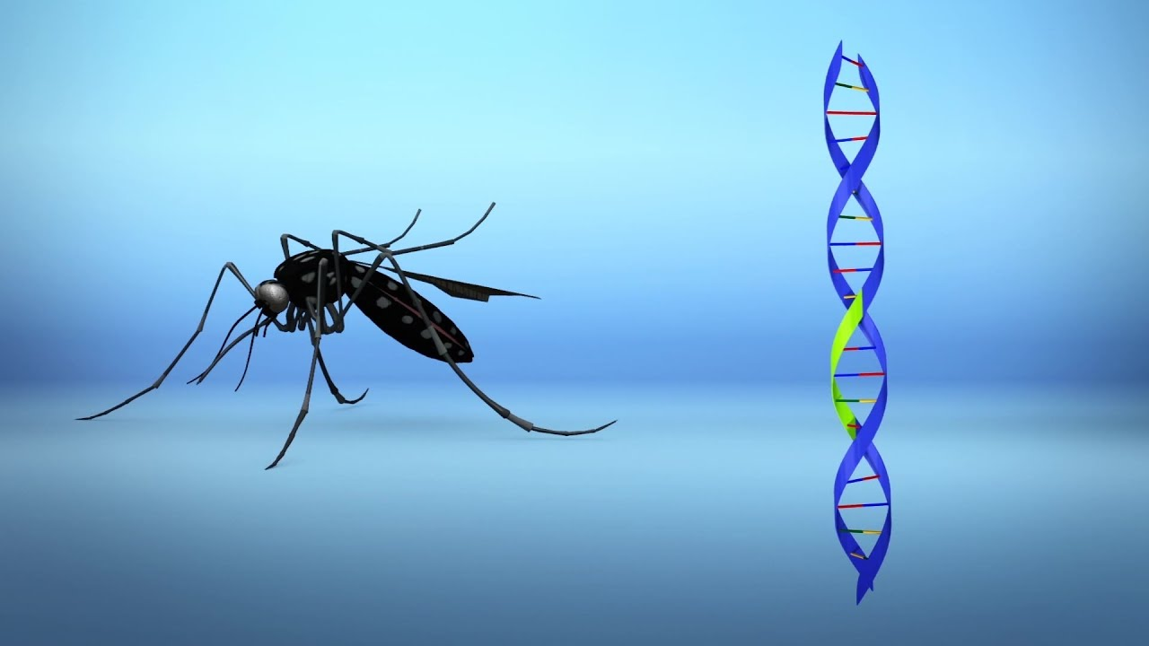 Bill Gates finanziert Projekt zur Freisetzung gentechnisch veränderter Moskitos, die Impfstoffe injizieren können