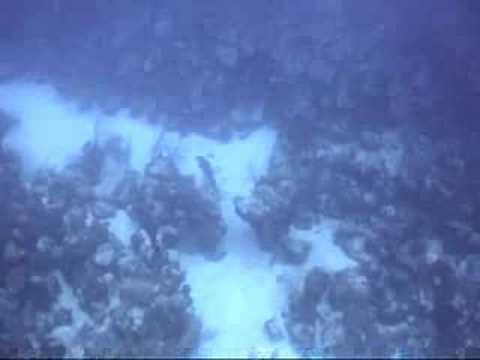 Black Grouper Spawning Aggregation