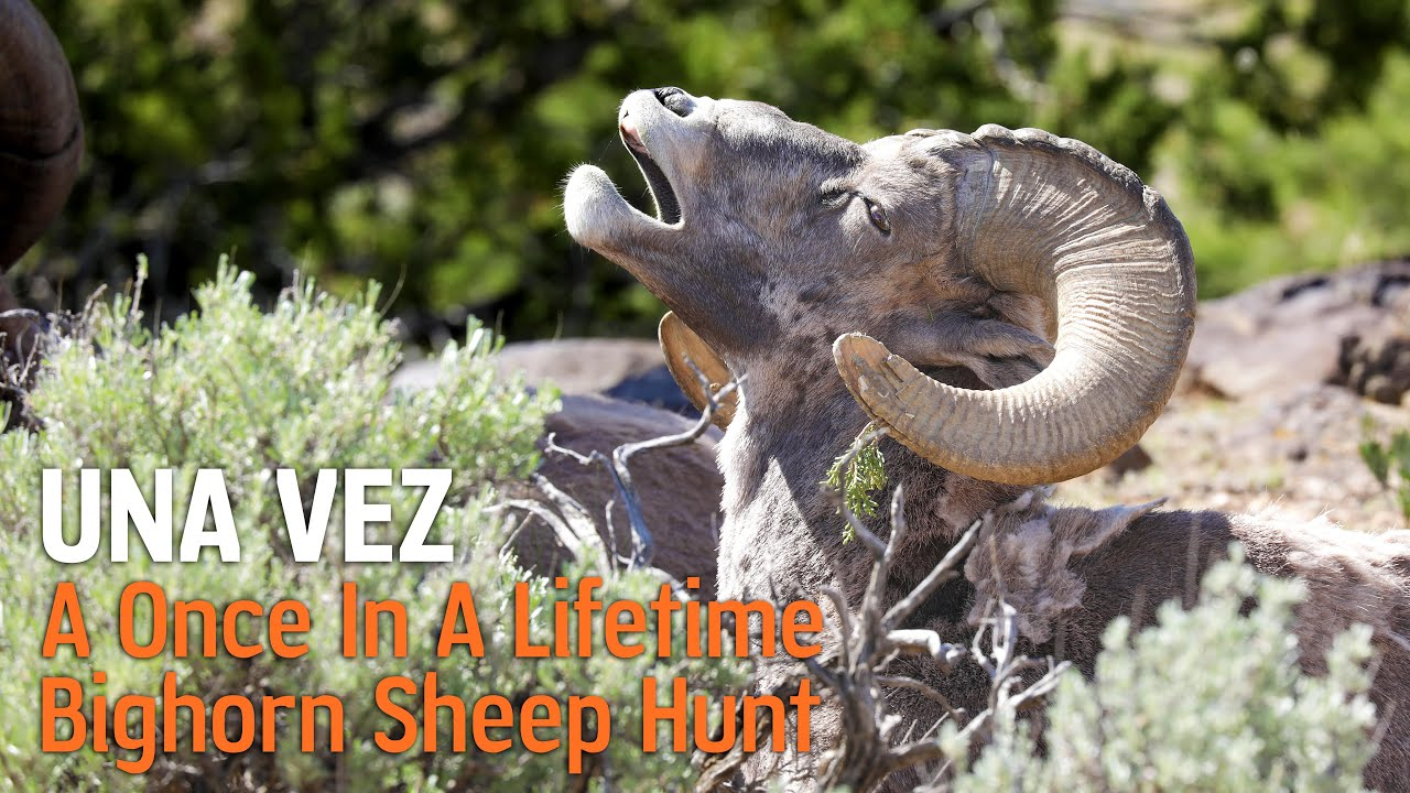 "Una Vez (""One Time"") - A New Mexico Bighorn Sheep Hunt Experience"