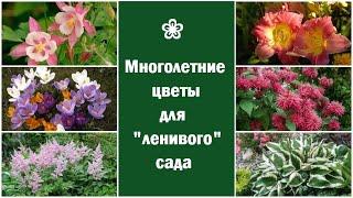 ❀ Начинающим: многолетние цветы для ленивого сада/цветника