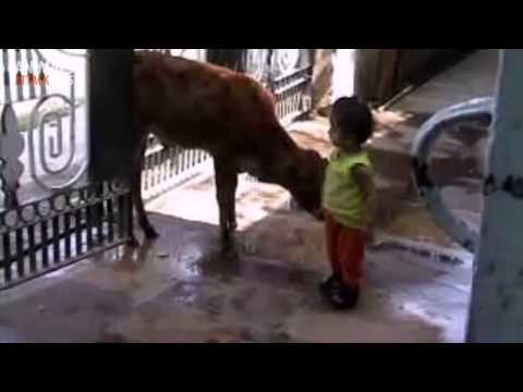 Animals Attack Kids
