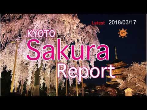 Latest Sakura report Kyoto 2018/03/17
